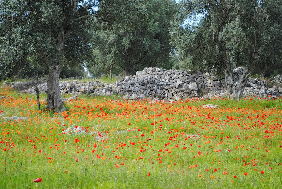 Spring in Puglia, Apulian countryside, cycling vacation